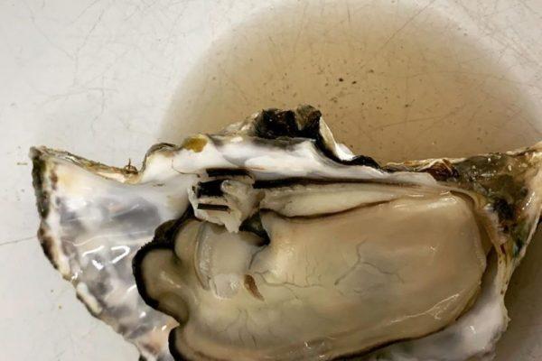 赤穂の牡蠣を差し入れで頂きました〜〜🎵